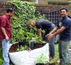 lansbury-gardeners2.jpg
